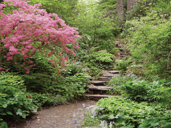 Spring Azaleas lining the steps at The Garden in the Woods ~ photos courtesy of Lisa Mattei