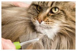 505_cat-grooming-copy