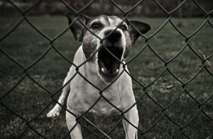 dog-barking-behind-fence